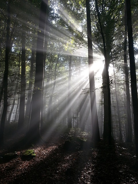 sunbeam through forest