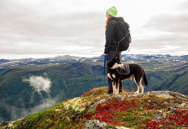 dog-on-harness-hiking