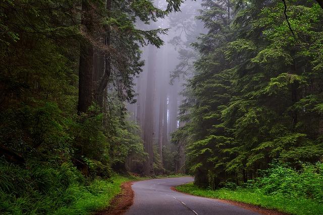 redwood-national-park-forest