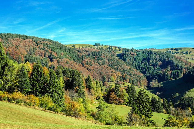 black-forest-view
