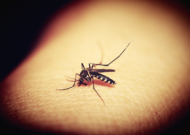 mosquitoe biting arm