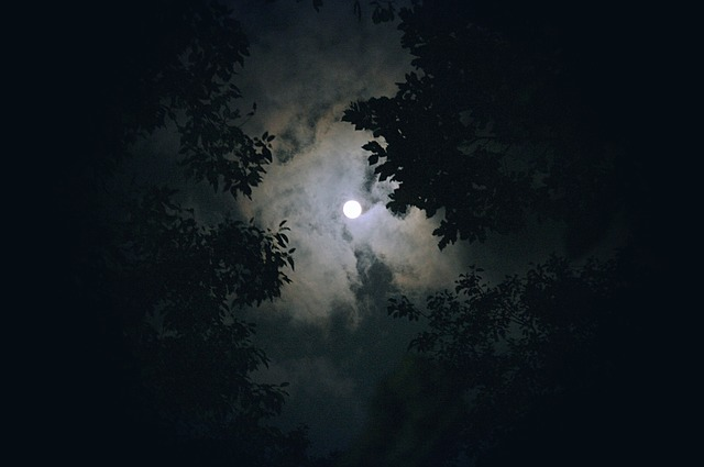 nighttime moon and forest