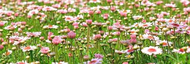 Pink Flower Meadow
