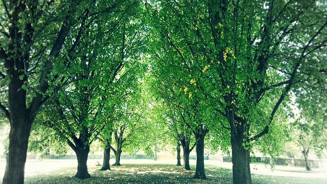 Shade Under Trees