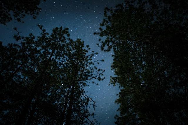 stars-behind-tree